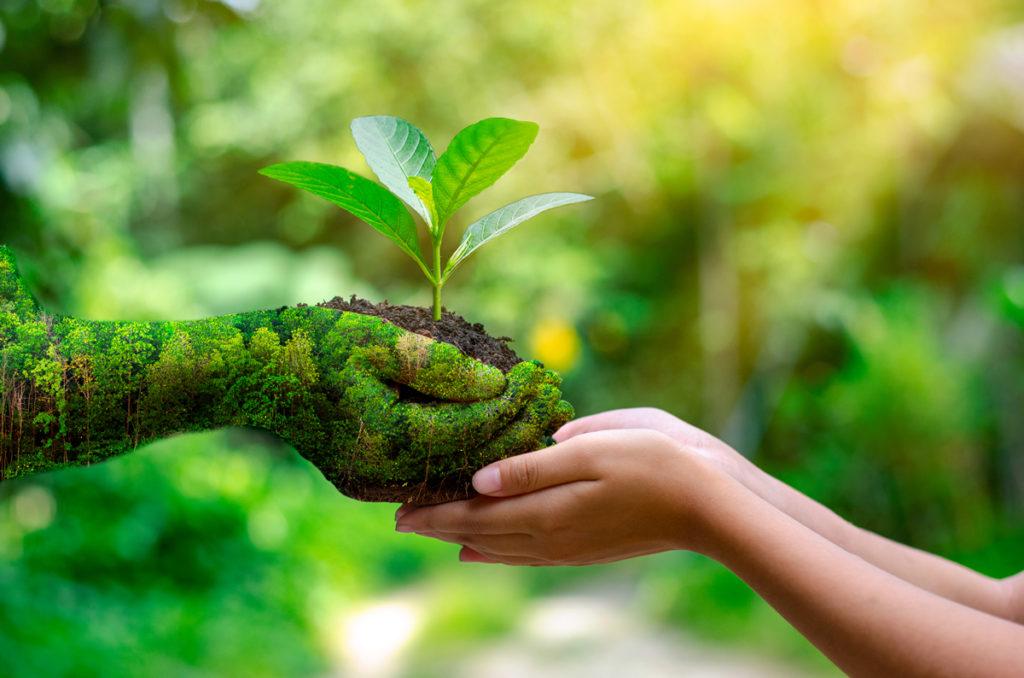Generacja Z dba w większym stopniu o ekologię niż starsi